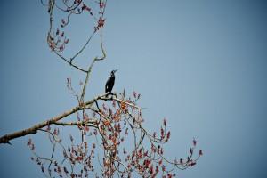 cormoran-percher-loire-ludovicletot