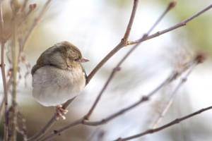 oiseau-hiver-branche-sologne-ludovicletot