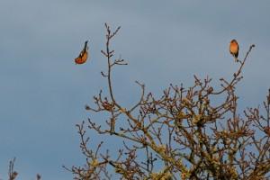 oiseau-plongeon-sologne-ludovicletot