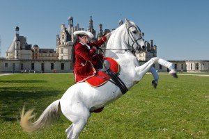 Lorie spectacle equestre Chambord©ludovicletot