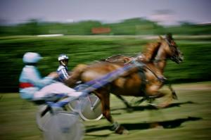course-hippique-orleans-ludovic-letot13