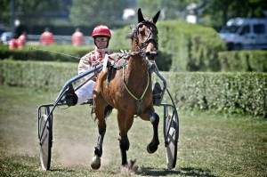 course-hippique-orleans-ludovic-letot8
