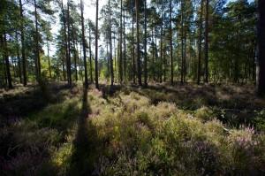 paysage-de-sologne-ludovic-letot1