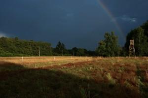 paysage-de-sologne-ludovic-letot10