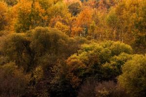 paysage-de-sologne-ludovic-letot12