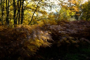 paysage-de-sologne-ludovic-letot14