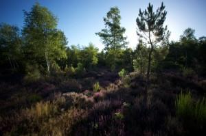 paysage-de-sologne-ludovic-letot2