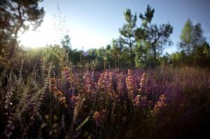 paysage-de-sologne-ludovic-letot3