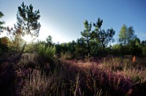 paysage-de-sologne-ludovic-letot4