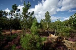 paysage-de-sologne-ludovic-letot8