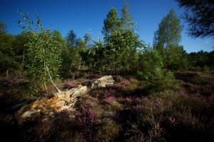 paysage-de-sologne-ludovic-letot9