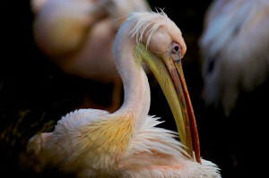 zoo-parc-de-beauval-ludovic-letot-